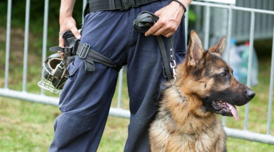 maitre chien agent de sécurité cynophile