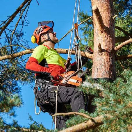 Comment élaguer un arbre soi-même? Etapes et précautions