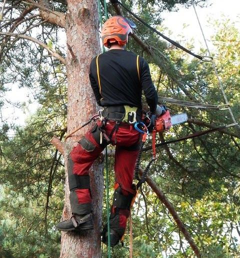 Le métier d'élagueur grimpeur, une profession sportive et risquée