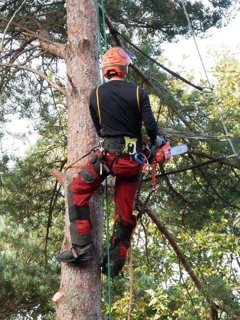 élagueur grimpeur métier