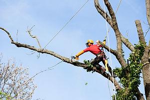 élagage arbre toulon