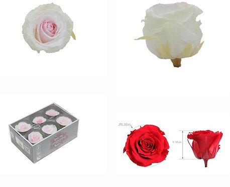 6 Roses Extra TRICOLOR