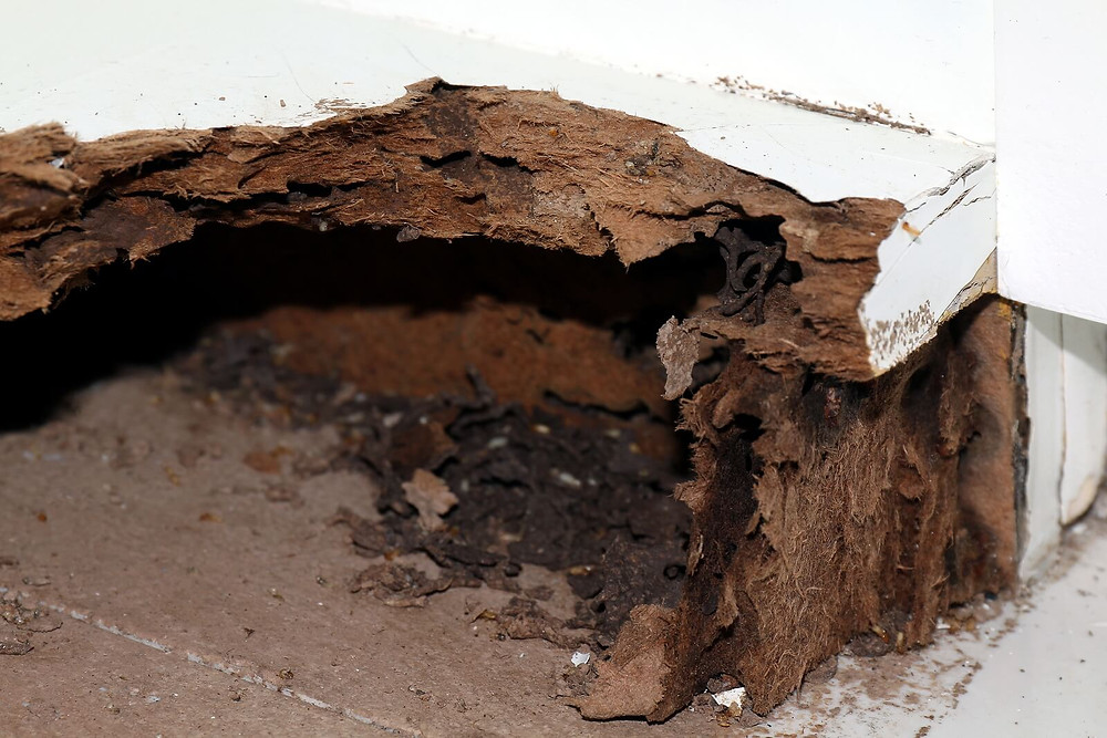 traitement de bois insectes champignons