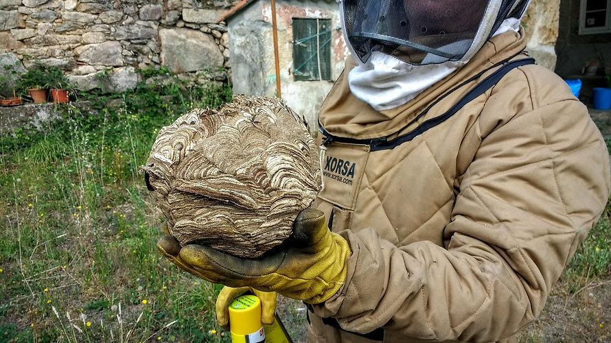 destruction nid de frelon asiatique seine et marne 77