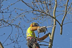 élagage abattage élagueur arbre à Toulon (var)