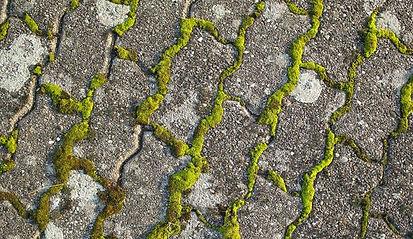 élagage arbre nettoyage terrasse toulon