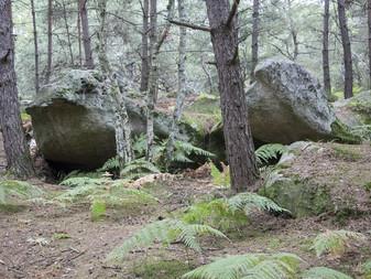 Pourquoi choisir la forêt de Fontainebleau pour vos promenades