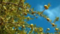 Visuel FIlm argane.jpg