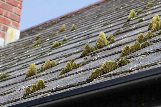Clean Toiture Protect démoussage toiture dans le Morbihan