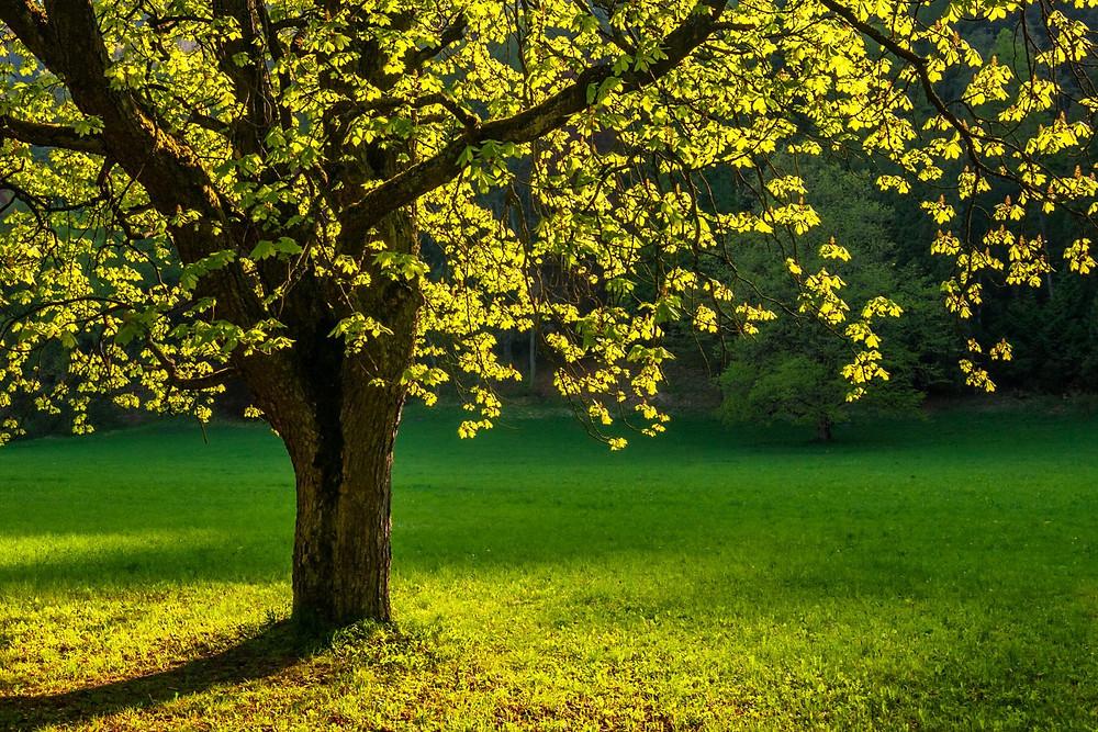 comment bien élagueur branche arbre