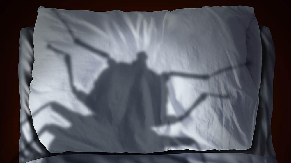 désinsectisation de punaises de lit