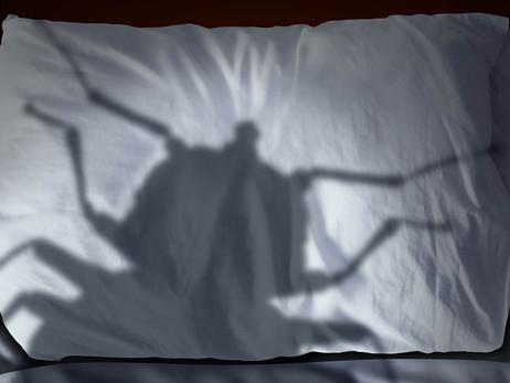 Envahis par les punaises de lit ? La désinsectisation est nécessaire.
