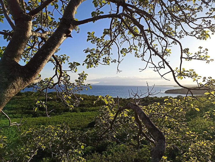 elagage arbre en guadeloupe