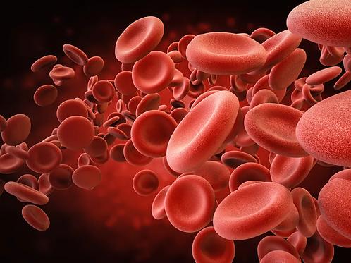 Men's Health & Wellness Blood Test