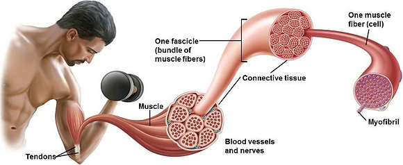 Increase Muscle Protein Synthesis for Older Men Therapy