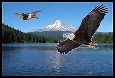 hummingbird_eagle_mountain.png