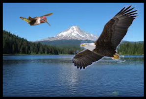 hummingbird_eagle_mountain.png