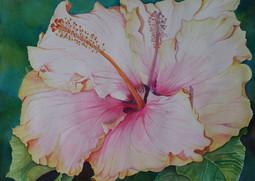 Hibiscus de mon jardin