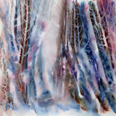 13- Envoûtante forêt