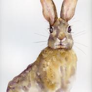 34- Lièvre