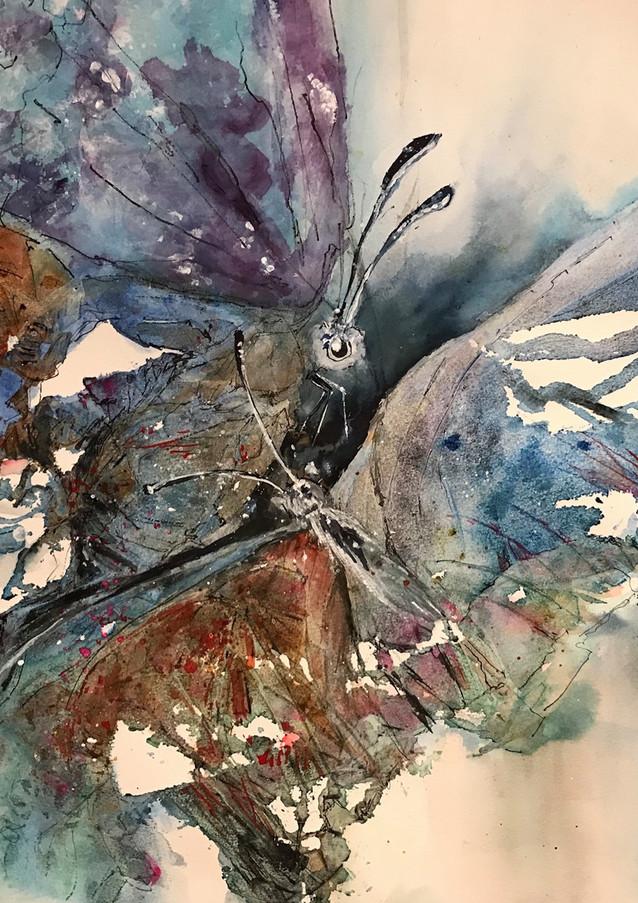 Série Papillons 1-20
