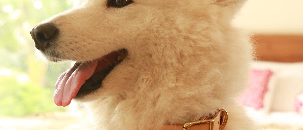 狗狗項圈,真皮項圈,犬用
