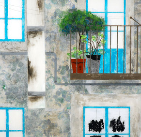 three windows and a door, two plants and a million emotions