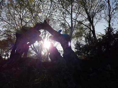 Bäume - Das Tor