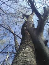 Bäume - Umarmung