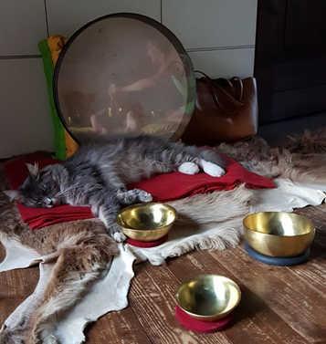 Harmonische tibetanische Klangschalen & Tiere