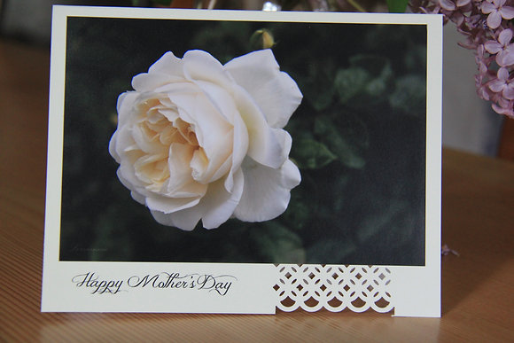 Happy Mother's Day - White Rose