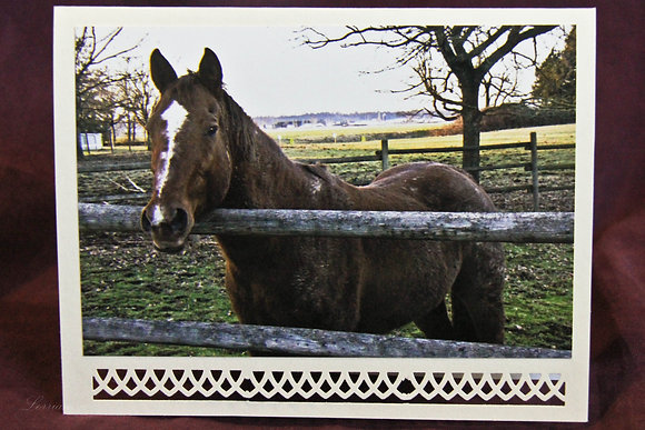 Our Beautiful World Down on the Farm - horse 076