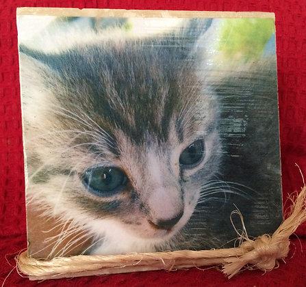 Gift Item - Tile - Gray Kitten