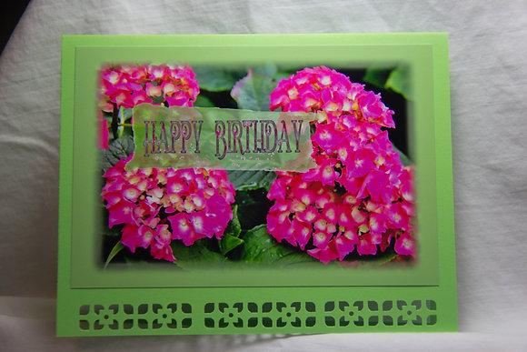 HB Pink Hydrangeas