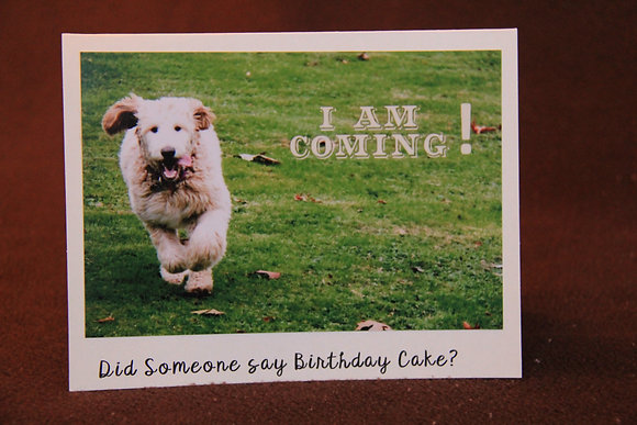 Birthday Cake Loving Dog