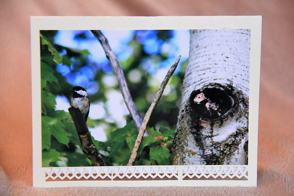 Blank - Chickadee by Birch Trees