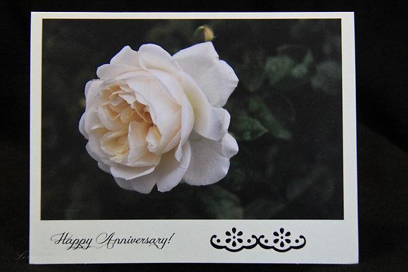 BWS - Anniversary - White Rose Full Bloom