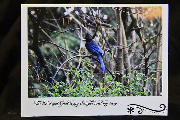 BWS - The Lord is My Song - Stellar Jay