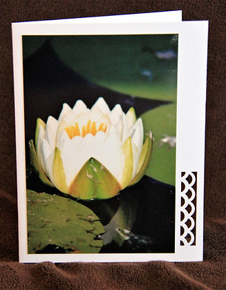 Blank Water Lily