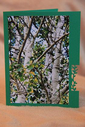 Blank - Birch Trees