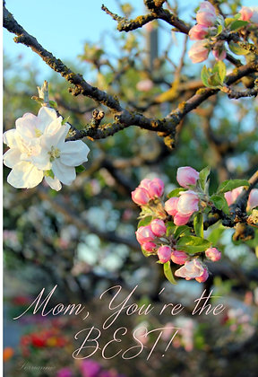 Mom, You're the Best - Apple Blossoms