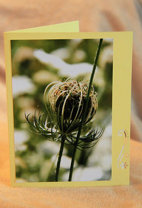 Blank - Wildflower Seedpod