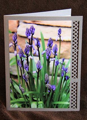 Blank Blue Flowers