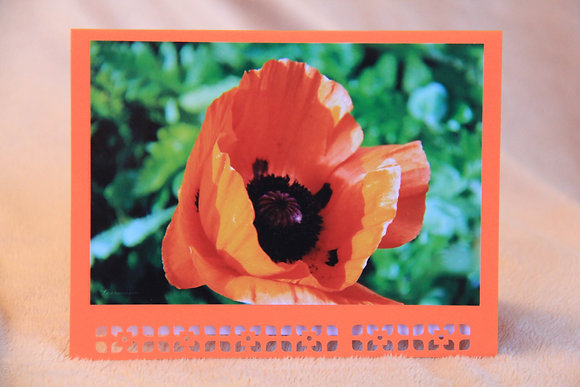 Blank - Poppy Bloom, Orange