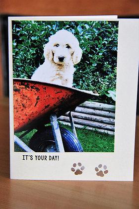 Wheel barrow of Puppy Fun