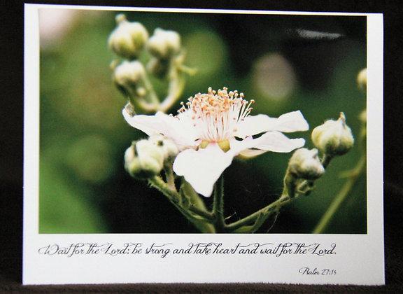 Scriptures - Berry Bloom - Psalm 27:14