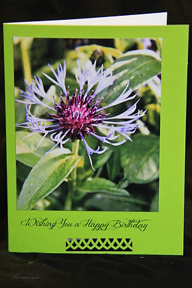 BWS - Birthday - Cornflower 1