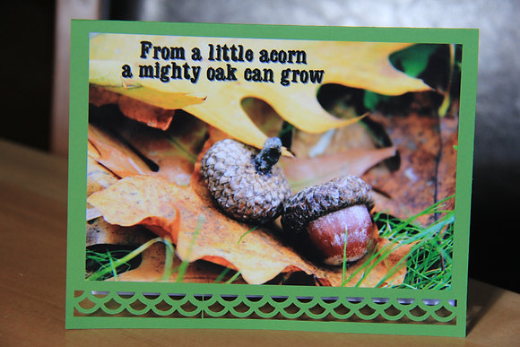 Baby - From a Little Acorn