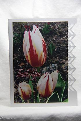 Thanks - Tulips
