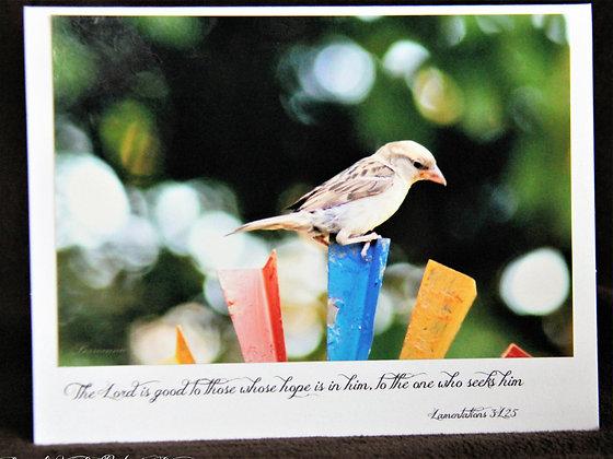 Scriptures Series: Bird - Lamentations 3:25